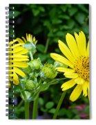 Twin Daisies  Spiral Notebook