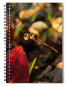 Twin Spotted Wintergreen Pods Spiral Notebook