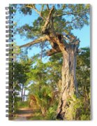 Twirling Tree Path Spiral Notebook