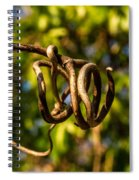 Twirling Vine Tendril Spiral Notebook
