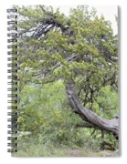 Twisted Cedar Spiral Notebook