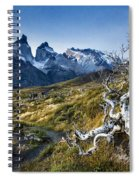 Twisted Tree And Trail Spiral Notebook