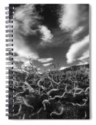 Twisted Trees And Clouds Spiral Notebook