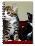 Two Adorable Kittens Spiral Notebook
