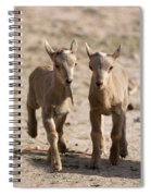 Two Aoudad Babies Playing Spiral Notebook