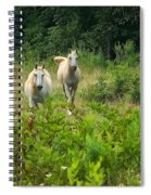 Two Appaloosa Horses  Spiral Notebook