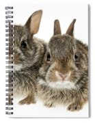 Two Baby Bunny Rabbits Spiral Notebook