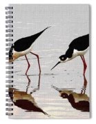 Two Black Neck Stilts Eating Spiral Notebook