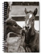 Two Colts Spiral Notebook