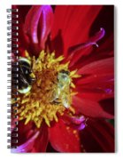 Two Different Bees Sharing  Spiral Notebook