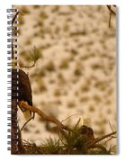 Two Eagles Hanging Out In Their Nest Spiral Notebook