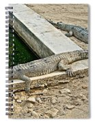 Two Gharial Crocodiles In Gharial Conservation Breeding Center In Chitwan Np-nepal   Spiral Notebook