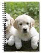 Two Golden Retriever Puppies Spiral Notebook