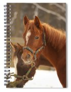 Two Horses In Winter Day Spiral Notebook