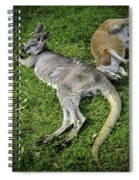Two Lazy Kangaroos Lying Down Spiral Notebook