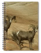 Two Male Rams At Zion Spiral Notebook