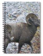 Two Male Rams Spiral Notebook