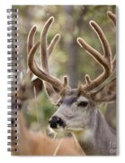 Two Mule Deer Bucks With Velvet Antlers  Spiral Notebook