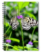 Two Paper Kite Or Rice Paper Or Large Tree Nymph Butterfly Also Known As Idea Leuconoe Spiral Notebook