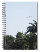 Two Pelicans Spiral Notebook