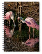 Two Pink Spoonbills Spiral Notebook