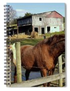 Two Quarter Horses In A Barnyard Spiral Notebook