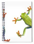 Two Red Eyed Tree Frogs Spiral Notebook