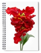Two Red Parrot Tulips Spiral Notebook