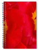 Two Red Tulips Spiral Notebook