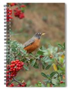 Two Robins Eating Berries Spiral Notebook