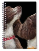 Two Spaniels Spiral Notebook