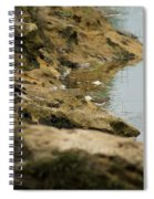 Two Spotted Sandpipers On The Flint Rivers Banks Spiral Notebook