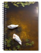 Two Swans With Sun Reflection On Shallow Water Spiral Notebook