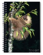 Two-toed Sloth Choloepus Didactylus Spiral Notebook