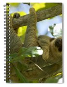 Two-toed Sloth Relaxing With A Grin Spiral Notebook