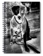 Two Tone Toby-jack Russell Spiral Notebook