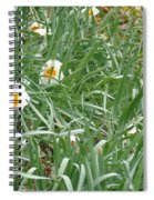 Two Toned Daffodils Spiral Notebook
