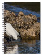 Two White Herons And A Coot Spiral Notebook