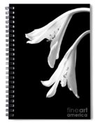 Two White Lilies Spiral Notebook