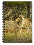 Two White Tailed Deer Spiral Notebook