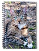 Tyger 3 Spiral Notebook