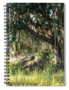 Under The Live Oak Tree Spiral Notebook