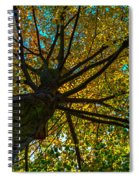 Under The Tree S Skirt Spiral Notebook