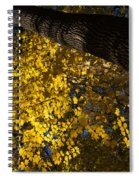 Under The Trees - Lambton Woods Toronto Canada Spiral Notebook