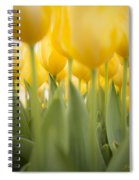 Under Yellow Tulips - 8x10 Format Spiral Notebook