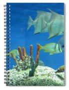 Underwater Beauty Spiral Notebook