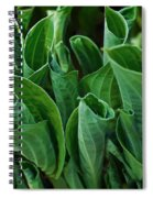 Unfurling Of The Hosta Spiral Notebook