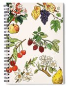 Unidentified Montage Of Fruit Spiral Notebook