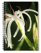 Beauty All Around Us Spiral Notebook