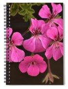 Pink Geranium Flower Spiral Notebook
